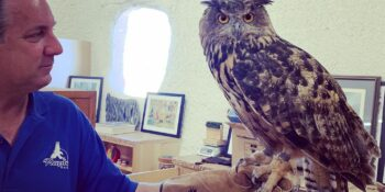Falconry Classes